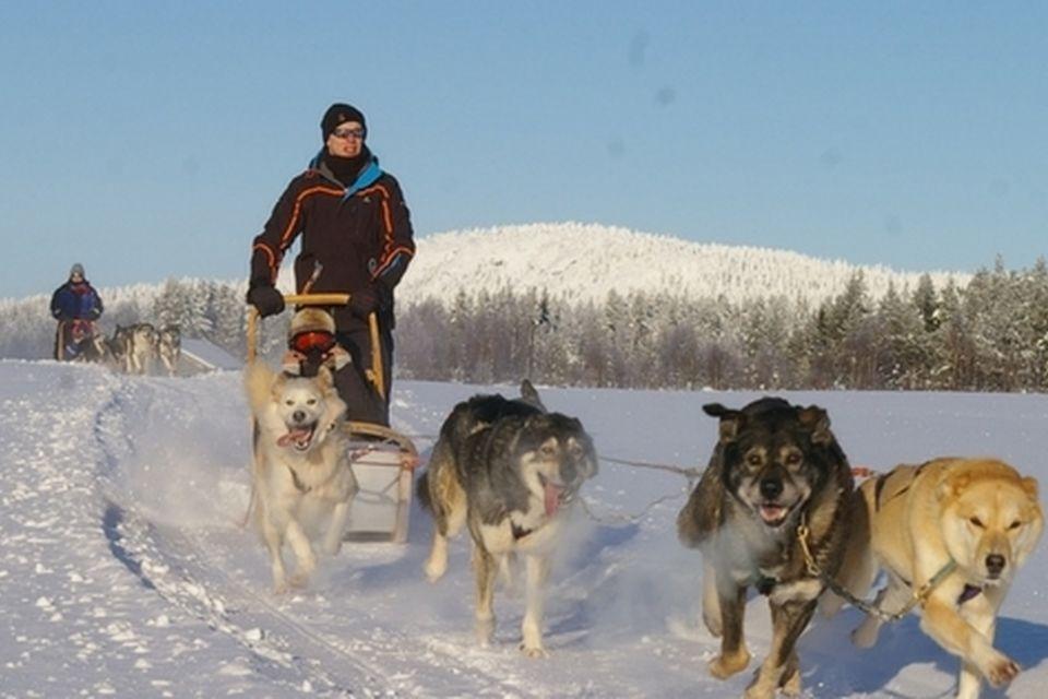 Arctic 2 Fbcoverdogs